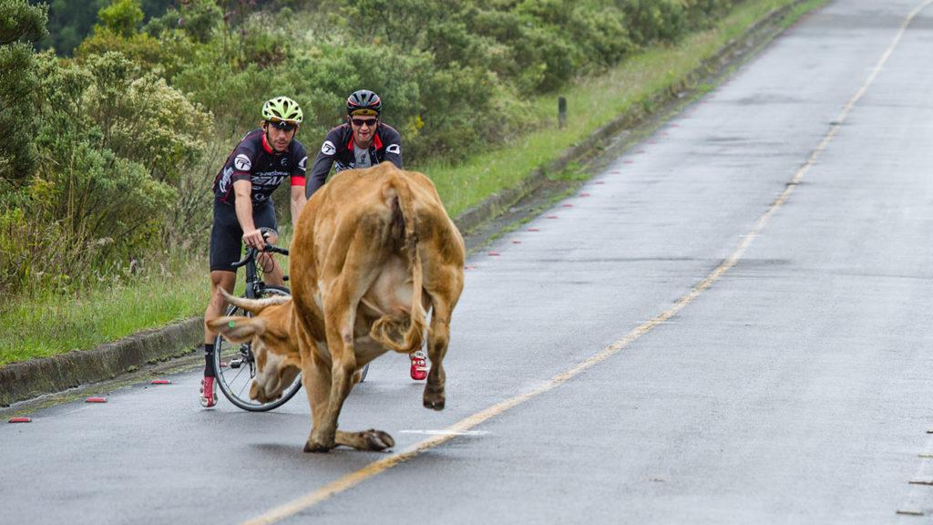 Arte e Ciclismo